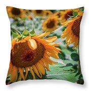 Beautiful Sunflower Field In South Carolina Throw Pillow