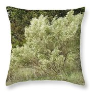 Beautiful Tree At Autumn  Throw Pillow