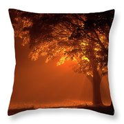 Beautiful Trees At Night With Orange Light Throw Pillow