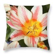 Beautiful Tulip With A Yellow Center And Pink Striped Petals Throw Pillow