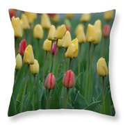 Beautiful Tulips Throw Pillow