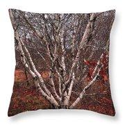 Beautiful White Birch Throw Pillow