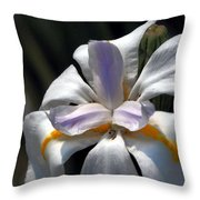 Beautiful White Day Lily Throw Pillow