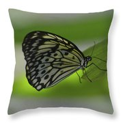 Beautiful White Tree Nymph Butterfly On  A Leaf Throw Pillow