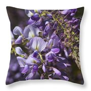 Beautiful Wisteria A Spring Delight Throw Pillow