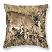 Beautiful Young Deer Throw Pillow