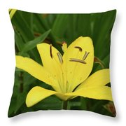 Beautiful Yellow Lily In A Garden During Spring Throw Pillow