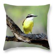 Beautifully Colored Great Kiskadee  Throw Pillow