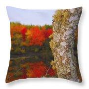 Beauty And The Birch - Nova Scotia Throw Pillow