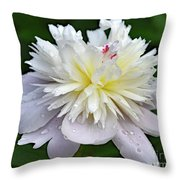 Beauty Can't Be Dampened - Festiva Maxima Double Peony Throw Pillow