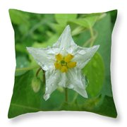 Beauty In All Sizes Throw Pillow