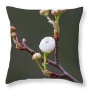 Beauty In The Emerging Throw Pillow