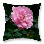 Beauty In The Rainforest Throw Pillow