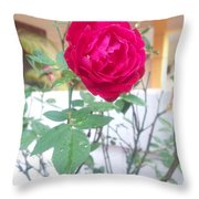 Beauty Of  Red Rose  Throw Pillow