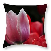 Beauty Of Spring Tulips 1 Throw Pillow
