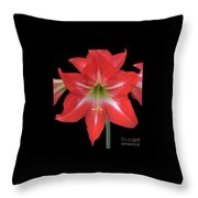 Beauty Of The Amaryllis Throw Pillow