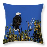 Beauty Of The Bald Eagle Throw Pillow