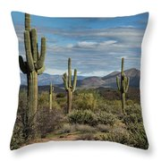 Beauty Of The Sonoran  Throw Pillow