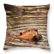 Beaver Feeding Throw Pillow
