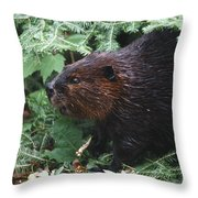 Beaver In Forest Throw Pillow