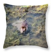 Beaver Spotted The Great Beaver Escape 01 Throw Pillow