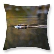 Beaver Swimming  Late Evening Throw Pillow