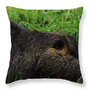 Beaver Whiskers Throw Pillow