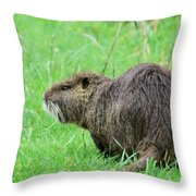 Beaver With Whiskers Throw Pillow