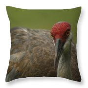 Bedroom Eyes Throw Pillow
