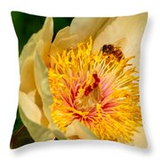 Bee And A Pale Yellow Early Glow Peony Throw Pillow