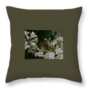 Bee And Small White Blossoms Throw Pillow