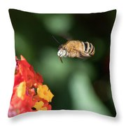 Bee, Bumblebee, Flying To A Flower, In Marseille, France Throw Pillow