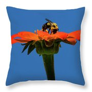 Bee Dreamsicle Throw Pillow