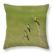 Bee Eaters  Throw Pillow