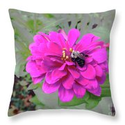 Bee Feeding From Pink Zinnia Throw Pillow