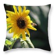 Bee Flying To Bright Lemon Yellow Wild Sunflower In High California Sun Throw Pillow