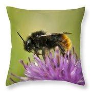 Bee I Throw Pillow