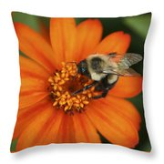 Bee On Aster Throw Pillow