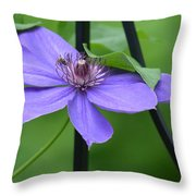 Bee On Bloom Throw Pillow