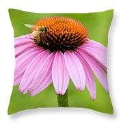 Bee On Cone Flower Throw Pillow