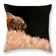 Bee On Flower 2 Throw Pillow