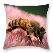 Bee On Flower 6 Throw Pillow
