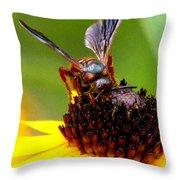 Bee On Lazy Susan 3 Throw Pillow