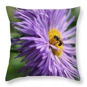 Bee On Purple Daisy Throw Pillow