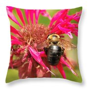 Bee On Tea Bloom Throw Pillow