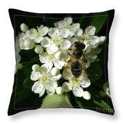 Bee On White Flowers 2 Throw Pillow