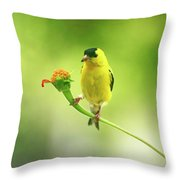 Goldfinch On Zinnia With Textures Throw Pillow