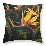 Bee Resting On The Petals Of A Bird Of Paradise  Throw Pillow