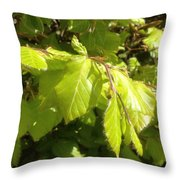 Beech Hedge In Spring Throw Pillow