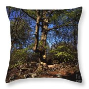 Beech Trees Coming Into Leaf  In Spring Padley Wood Padley Gorge Grindleford Derbyshire England Throw Pillow